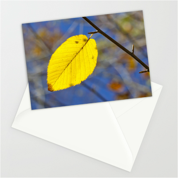 Pretty fall notecards: Yellow leaf against blue sky. By Calm Cradle Photo & Design