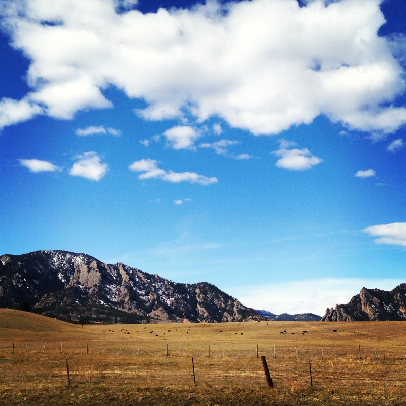 Cattle-speckled landscape. Rocky Mountains, Boulder, Colorado. By Calm Cradle Photo & Design
