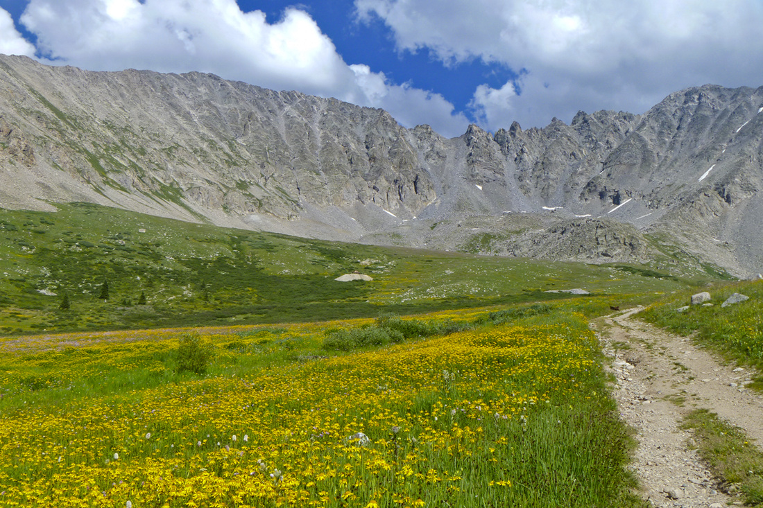 Mayflower Gulch brimming with yellow wildflowers. Calm Cradle Photo & Design