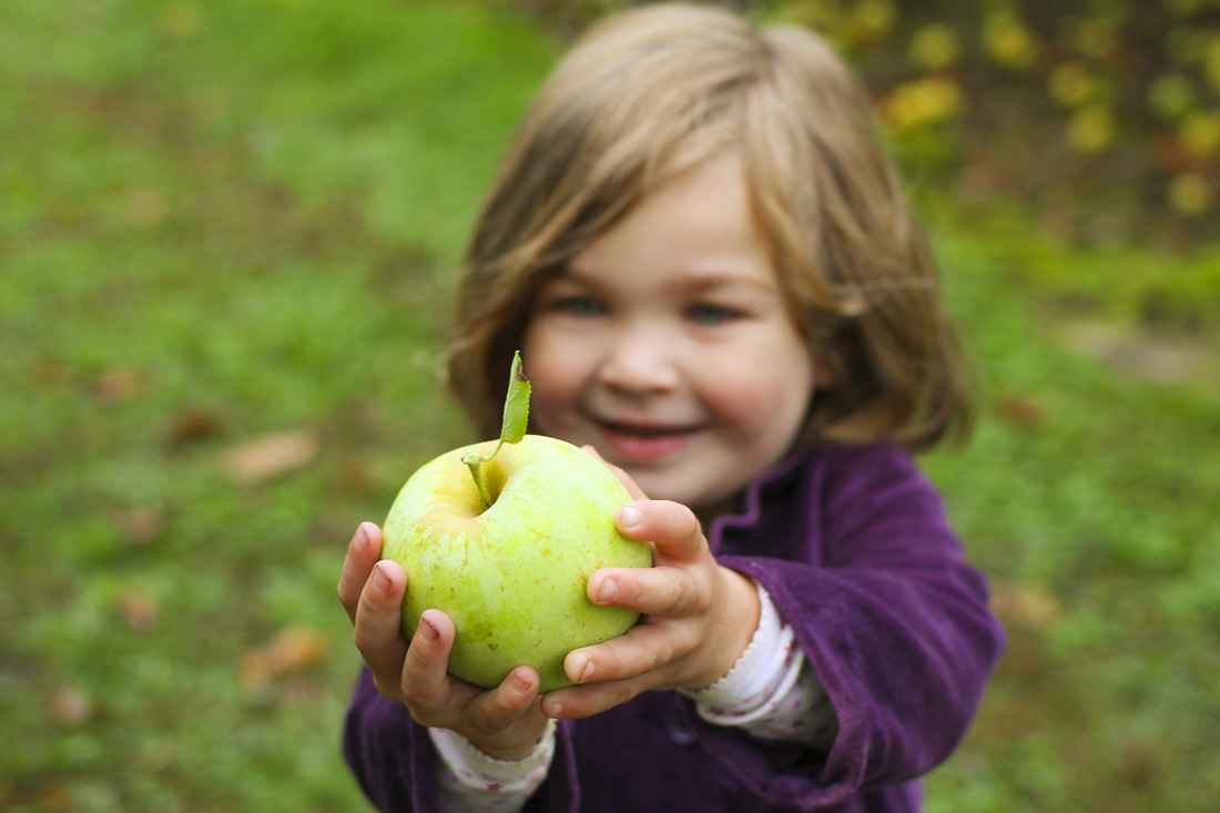 Toddler in purple showing her green apple. Hendersonville, NC. (Stepp's Hillside Orchard) By Calm Cradle Photo & Design
