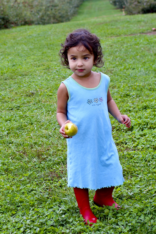 Toddler apple picking. By Calm Cradle Photo & Design