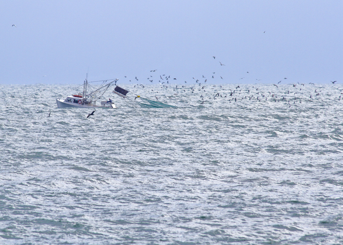 Fishing boat followed by birds. Carolina Beach, North Carolina. By Calm Cradle Photo & Design