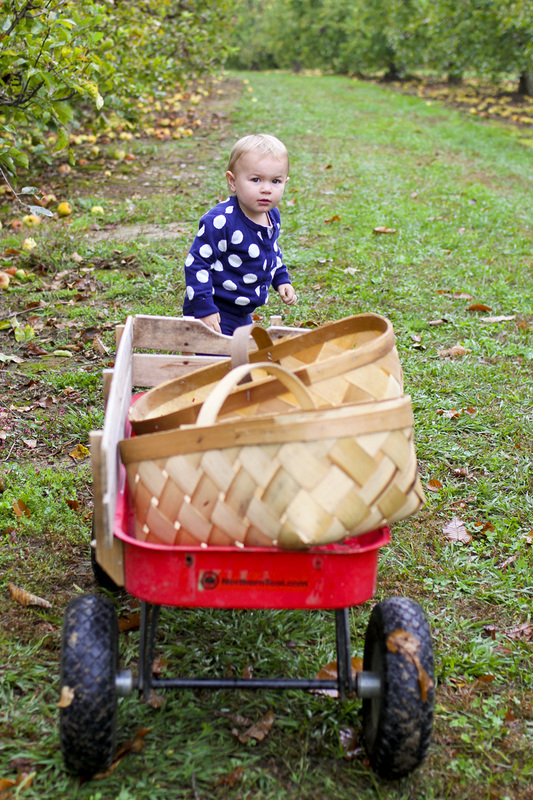 Toddler pulling wagon at apple orchard. Hendersonville, NC (Stepp's Hillside Orchard. By Calm Cradle Photo & Design