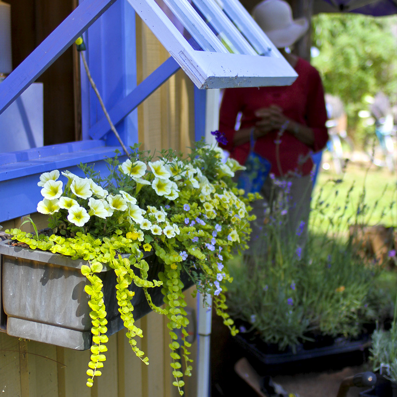 Lavender garden shed with window box. Calm Cradle Photo & Design