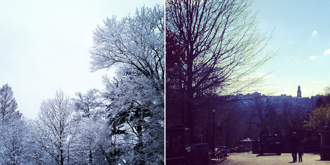 Left: Snowy day in DC. Right:Smithsonian National Zoo. Washington, DC. Calm Cradle Photo & Design