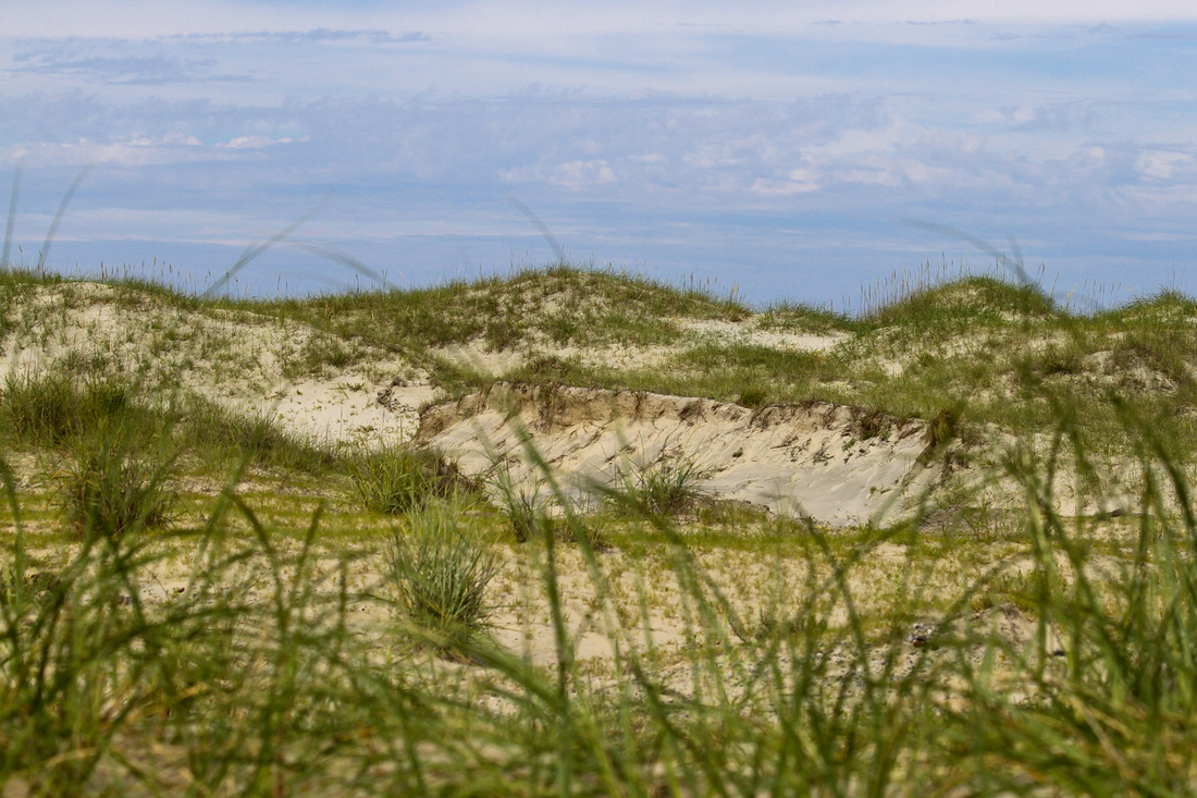 Sand dunes with sea oats. Currituck Banks, Outer Banks, North Carolina (NC). By Calm Cradle Photo & Design
