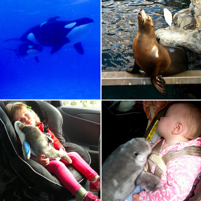 Orcas, sea lion and sleeping girls. SeaWorld, Orlando, Florida. Calm Cradle Photo & Design