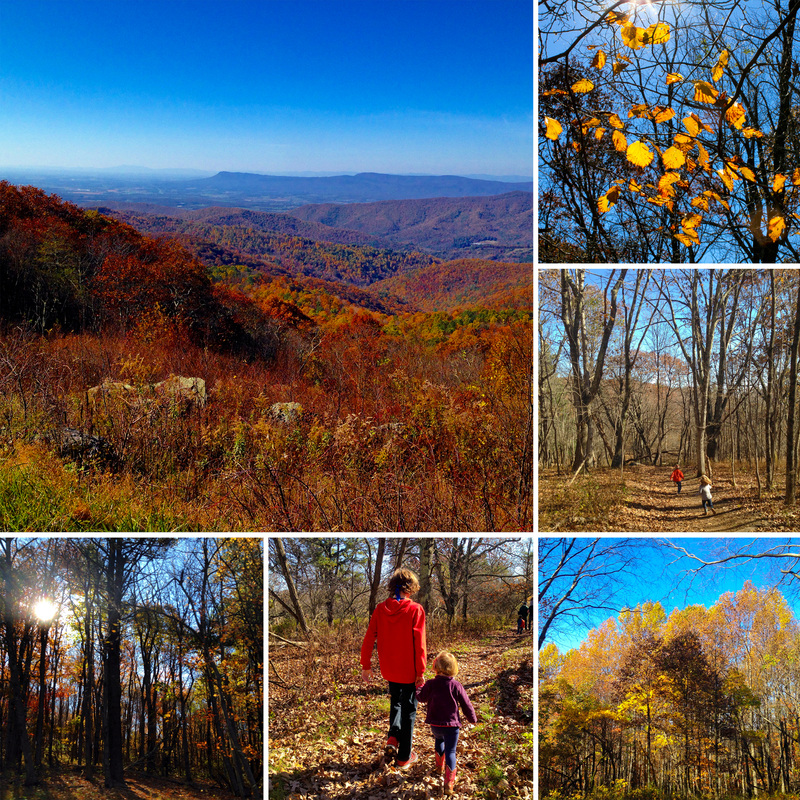 Fall foliage. Shenandoah National Park, Virginia. By Calm Cradle Photo & Design