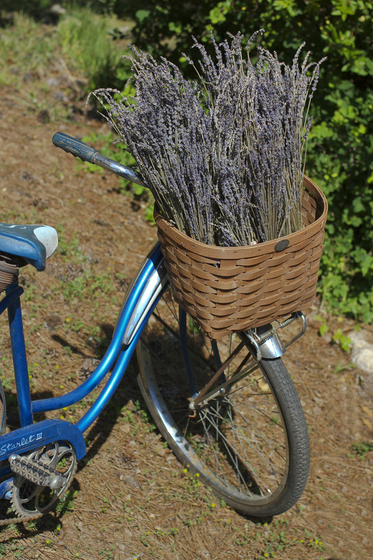 Bicycle basket filled with lavender. Calm Cradle Photo & Design